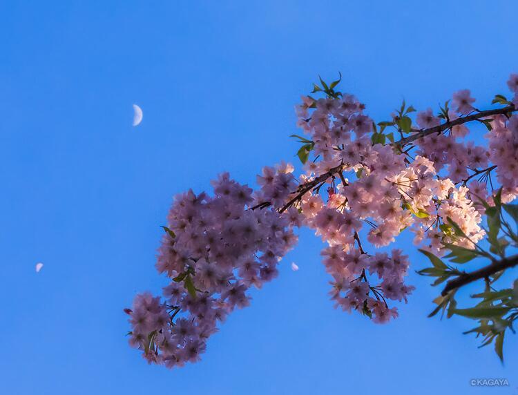 月明かりと桜のコラボレーション★KAGAYAさんが映し出す春の夜空へご招待