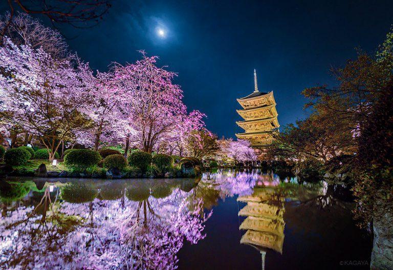 KAGAYA星空ギャラリー 第29回 ~京都・奈良の夜桜〜