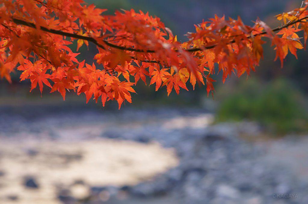 KAGAYA星空ギャラリー更新!色とりどりの紅葉と月の写真をお届け★