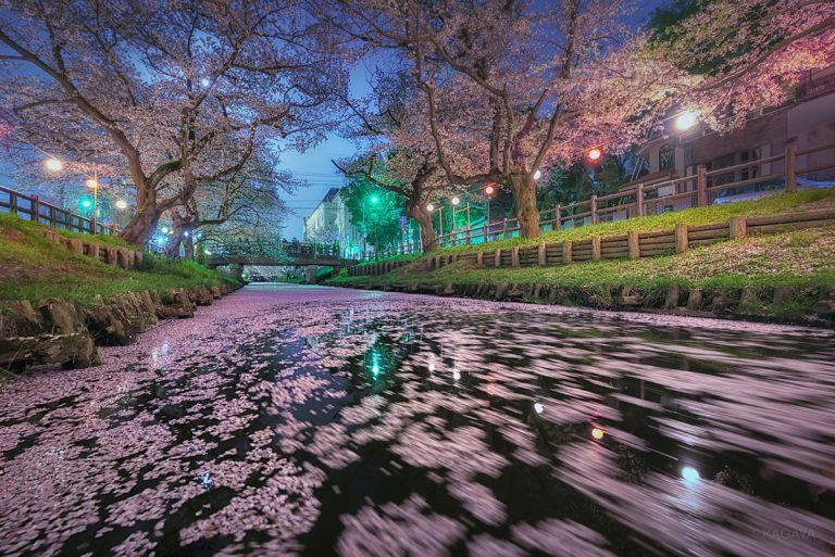 KAGAYA 星空ギャラリー 第46回 ~桜と十五夜~